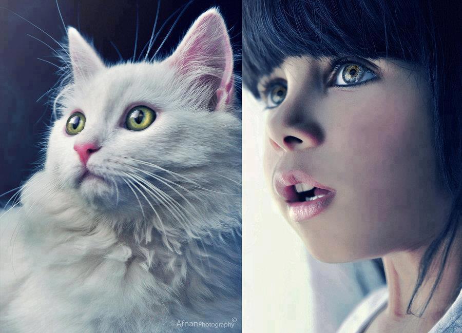 بالصور اجمل صور فتيات وقطط 20160626 760