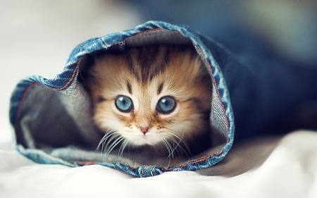 بالصور اجمل صور فتيات وقطط 20160626 761