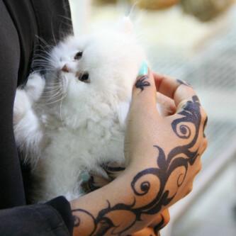 بالصور اجمل صور فتيات وقطط 20160626 762