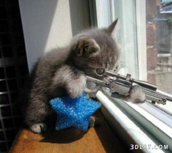 صوره اروع صور قطط مضحكة