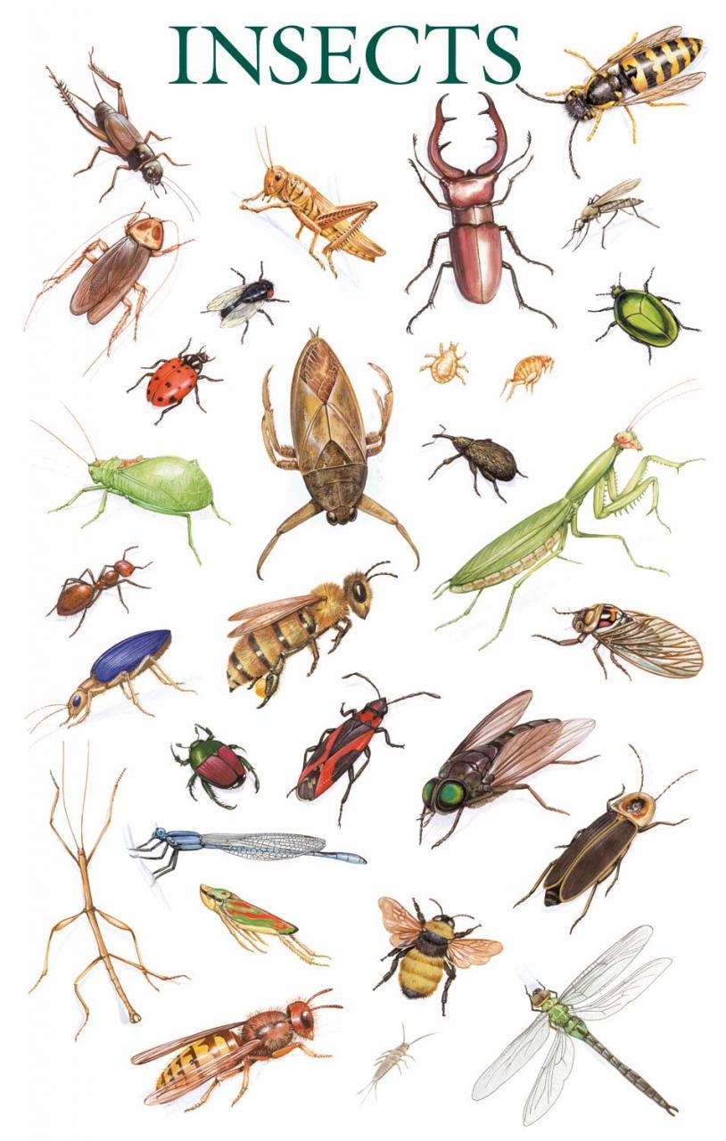 صوره انواع الحشرات المنزلية بالصور