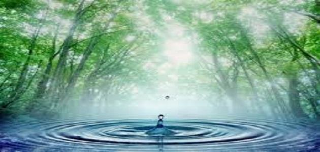 اهمية الماءَ للنبات