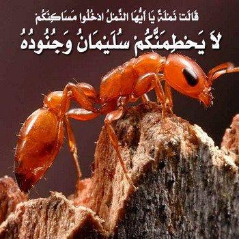 بالصور الحشرات المذكورة في القران الكريم 20160627 2226
