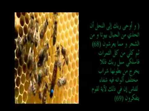 بالصور الحشرات المذكورة في القران الكريم 20160627 2227