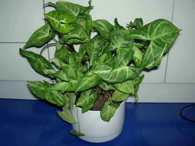 صوره نباتات الزينة الداخلية بالصور