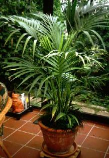 بالصور نباتات الزينة الداخلية بالصور 20160627 2380