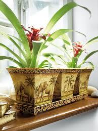 بالصور نباتات الزينة الداخلية بالصور 20160627 2383