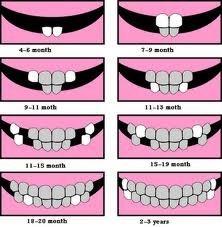 بالصور معلومات مفيده عن الاسنان 20160627 2386