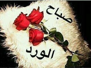 صوره صور اجمل الورود الصباحية