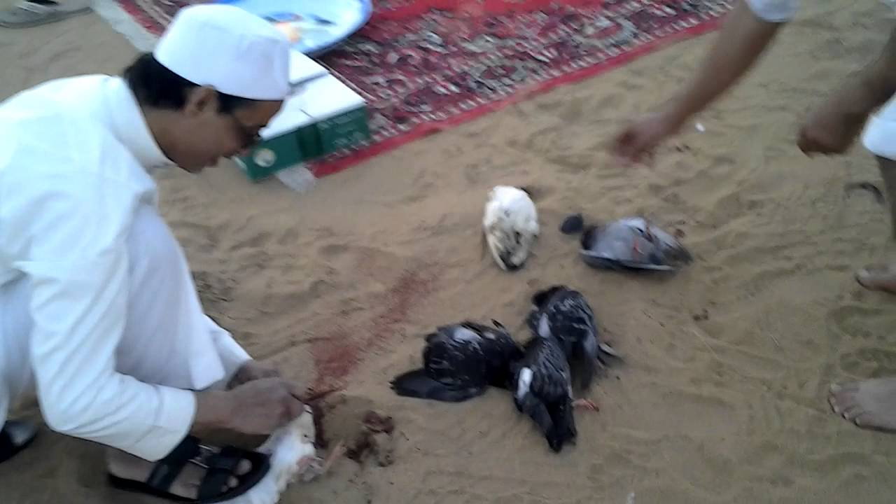 صوره طريقة الذبح الشرعى للطيور