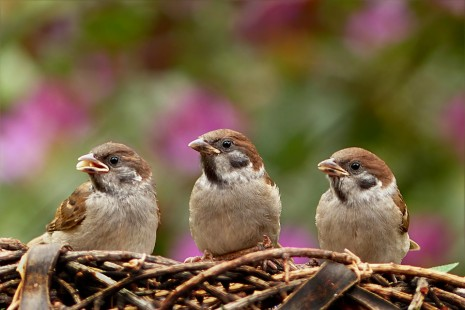 صوره تفسير رؤية العصافير في المنام
