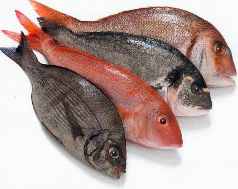 بالصور تفسير الاحلام صيد السمك 20160629 2193