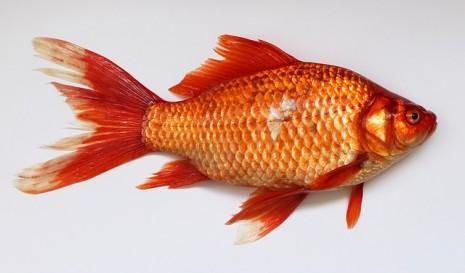 بالصور تفسير الاحلام صيد السمك 20160629 2194