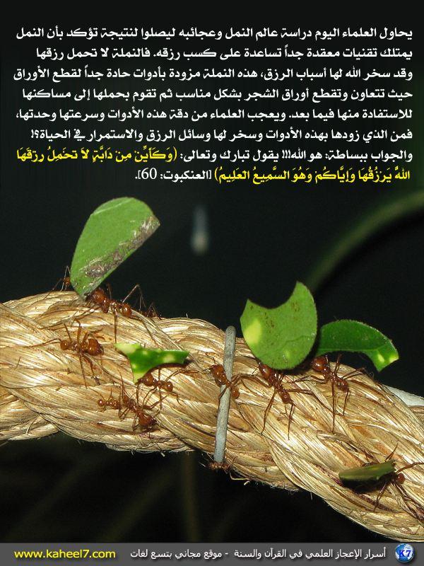 http://kaheel7.com/ar/images/stories/ants-eat.JPG