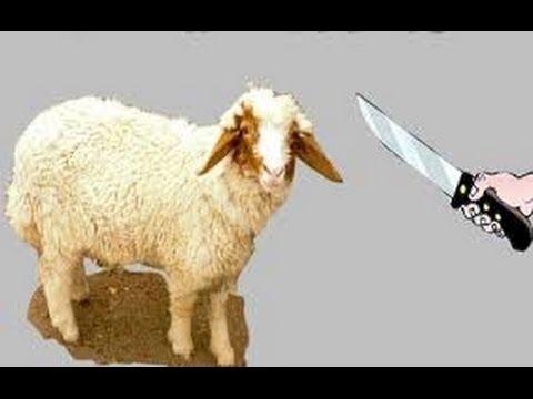 صوره كيفية ذبح الخروف حسب الشريعة الاسلامية