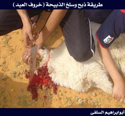 بالصور كيفية ذبح الخروف حسب الشريعة الاسلامية 20160629 477