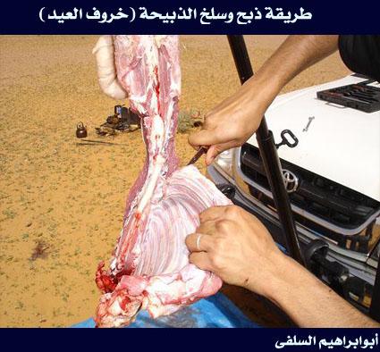 بالصور كيفية ذبح الخروف حسب الشريعة الاسلامية 20160629 478