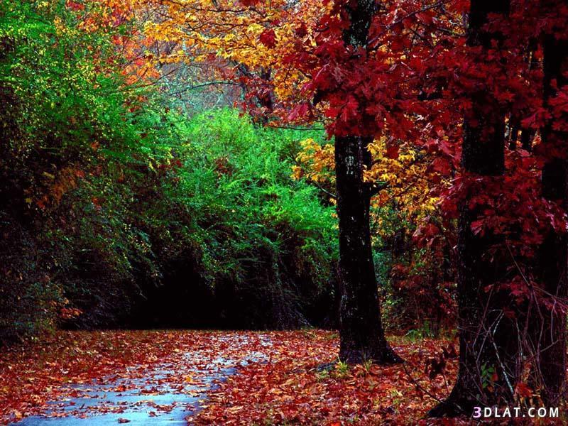 صوره صور خلفيات طبيعة رائعة