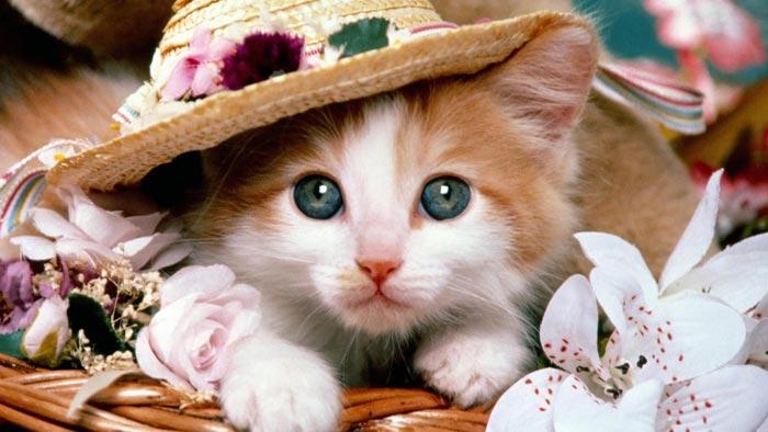 صوره تفسير رؤية القطط في المنام