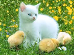 صوره اجمل 10 قطط في العالم