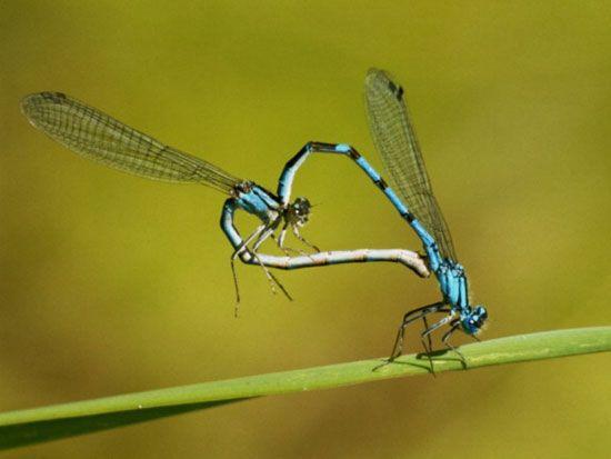 صوره الحلم بحشرات مختلفه