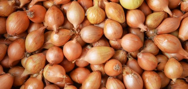 صوره ماهي فوائد قشر البصل للتخلص من الوزن الزائد