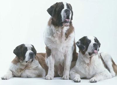 صورة مجموعه صور كلاب جميله