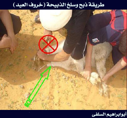 بالصور كيفية ذبح الخروف حسب الشريعة الاسلامية 86b236981e