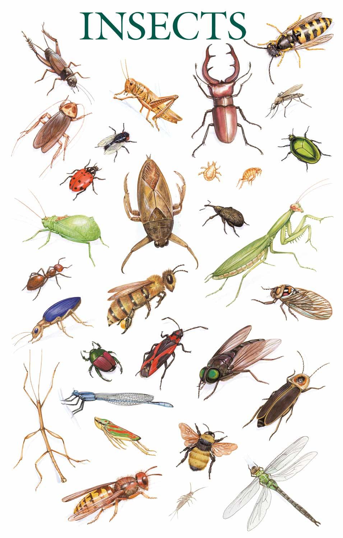 صورة انواع الحشرات المنزلية بالصور