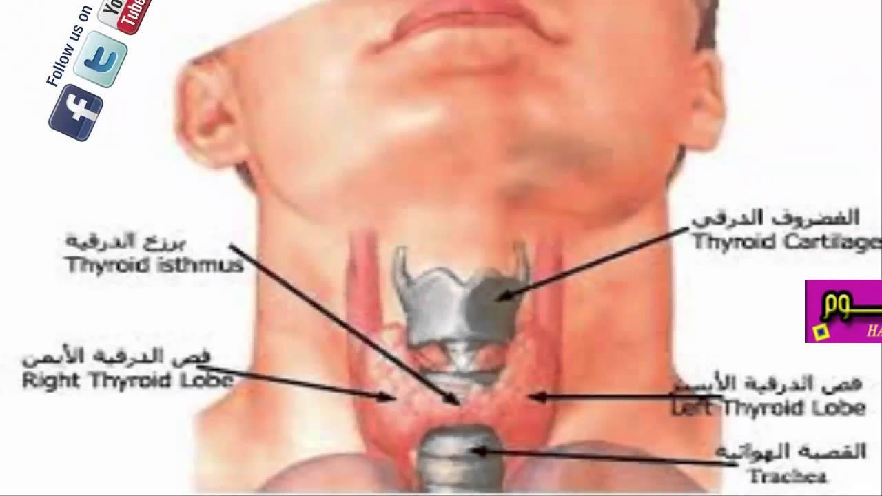 بالصور علاج الغدة الدرقية الخاملة بالقران maxresdefault 200
