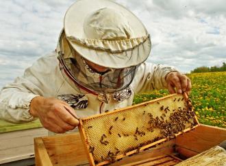 صور بحث عن فوائد النحل