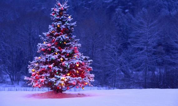 بالصور شجرة راس السنة الكريسماس 20160701 1495