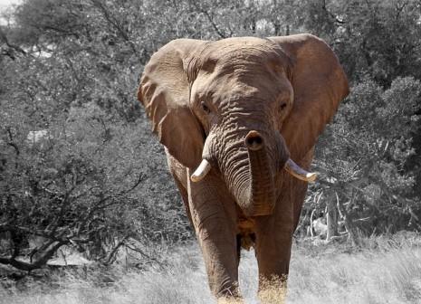 بالصور تفسير رؤية الفيل في المنام 20160701 2218