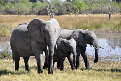 بالصور تفسير رؤية الفيل في المنام 20160701 2219