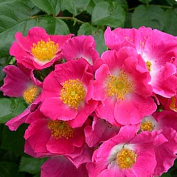 صوره صورة زهور وورود بريه