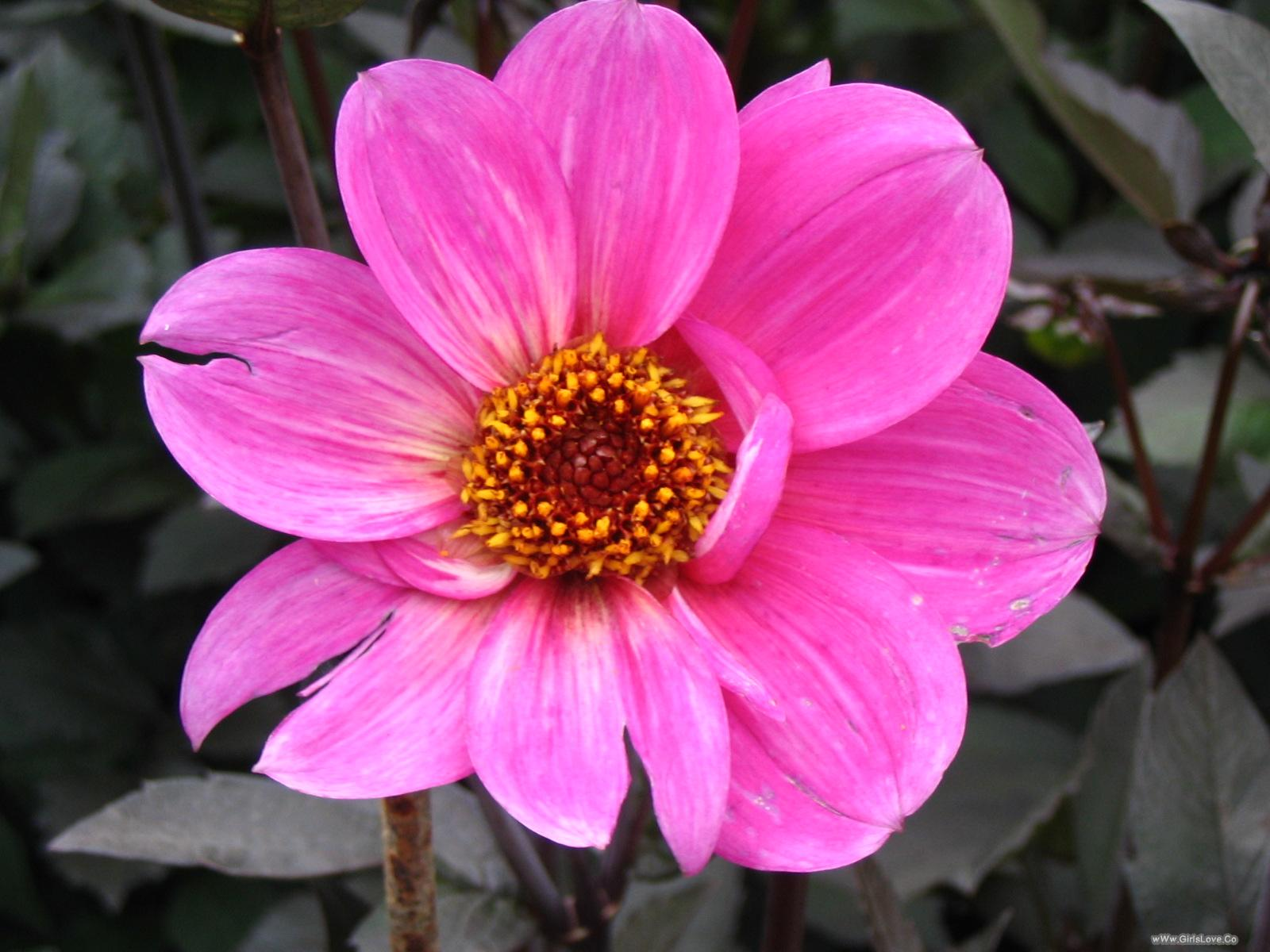 بالصور صورة زهور وورود بريه 20160701 2233