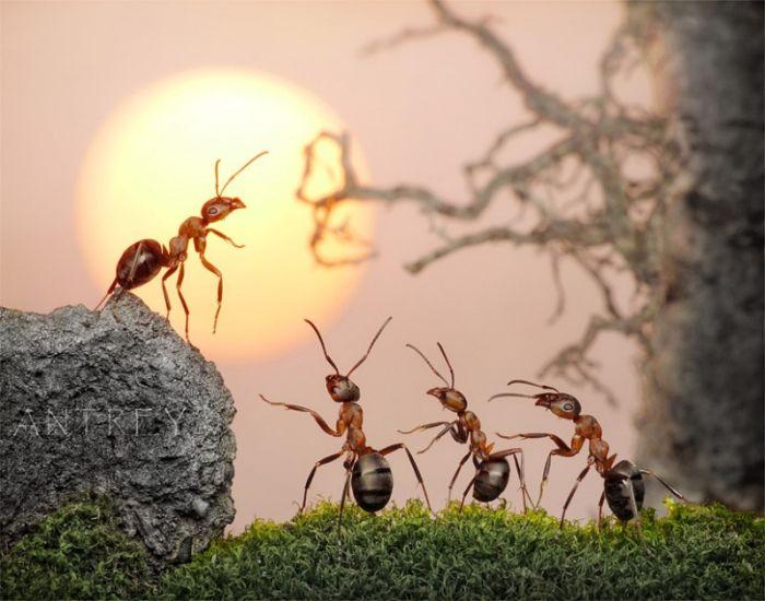 صوره قصة النملة مع سليمان عليه السلام