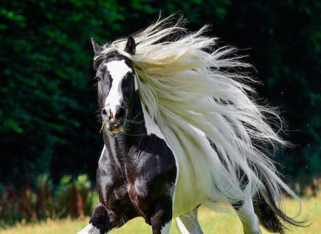 صوره افضل صور لخيول جميلة