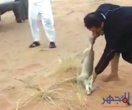 صوره صاحب فيديو تعذيب ثعلب
