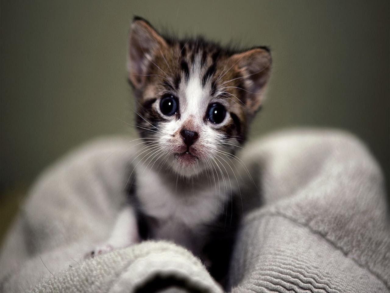 صوره اسئله عن ولادة القطط