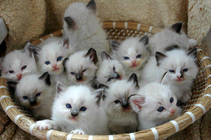 http://www.thaqafnafsak.com/wp-content/uploads/2014/02/Basket-Of-Cats.jpg