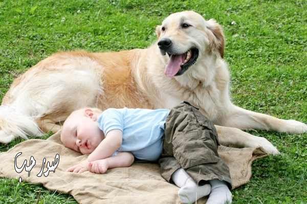 صوره تفسير حلم الكلاب تطاردني