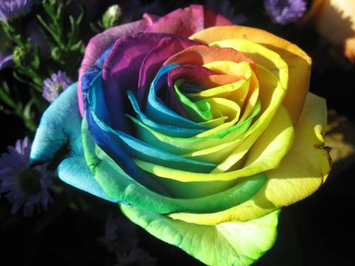 صوره احلى الورود بالعالم