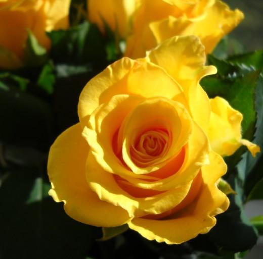 بالصور احلى الورود بالعالم 20160703 1504