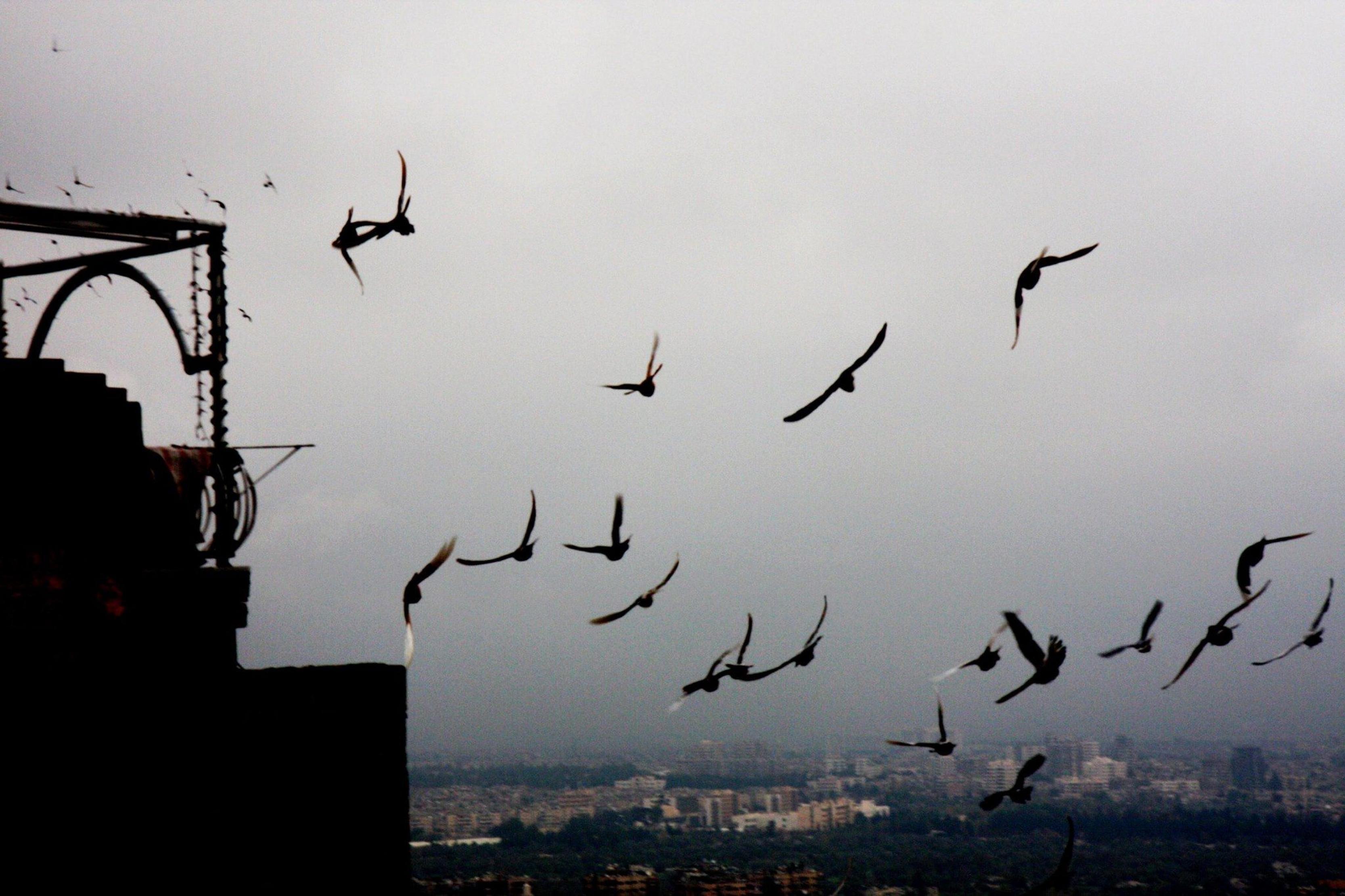 http://images.huffingtonpost.com/2015-12-09-1449627276-8134185-Damascus.jpg