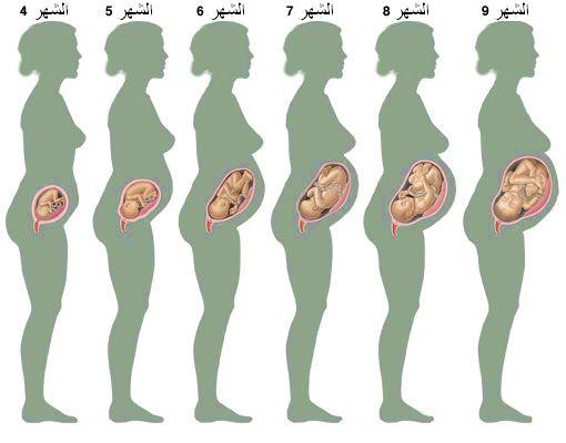 صوره حركة الجنين في الشهر السادس من الحمل