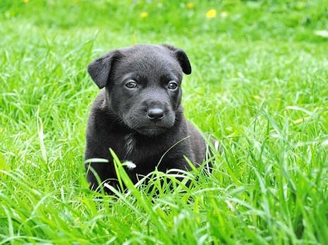صوره تفسير رؤية الكلاب في المنام لابن سيرين