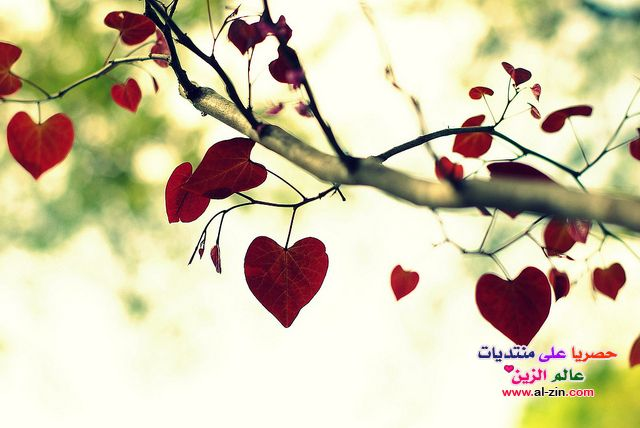 صوره شعر حب رومانسي قصير
