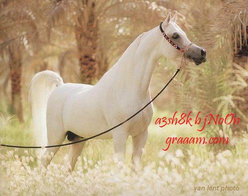 صوره معلومات جديده عن الحصان