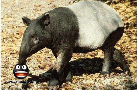 صور اغرب الحيوانات ،<p></a></p> <p></p>اغرب 23 حيوان في العالم
